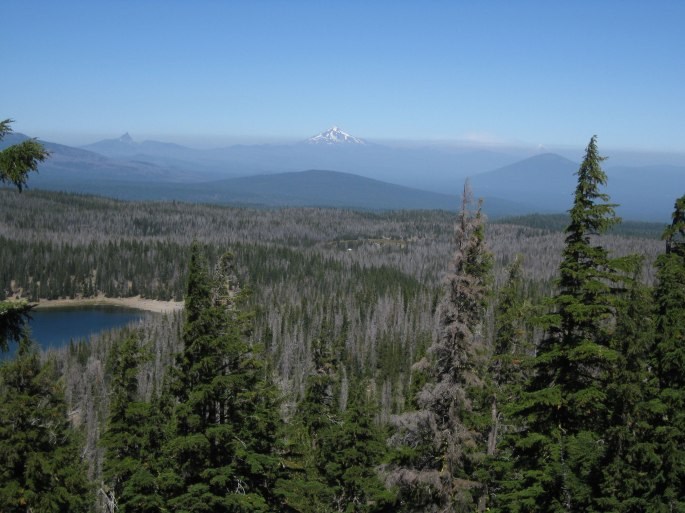 oregon-forest-mortality-2011